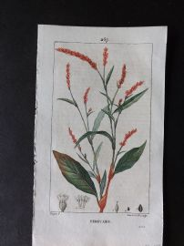Turpin C1815 Antique Botanical Print. Persicaire. Water Pepper 267